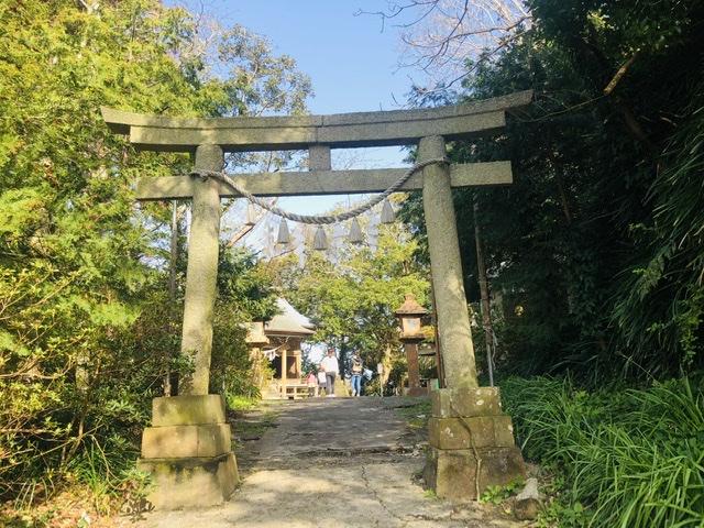 タブノキの御神木が凄い!遠見岬神社